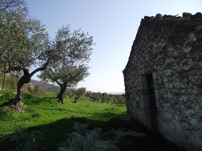 Farmhouse to restore with olive groves in Italy Molise, Castelmauro (Lampone)