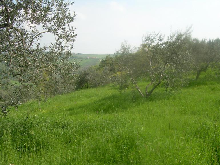 Land for sale in Molise – Terreno con Diruto, Civitacampomarano
