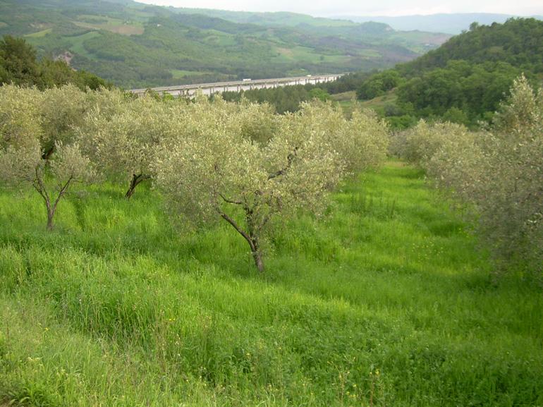 Land Terra del Barone, italian property for sale –  Guardialfiera