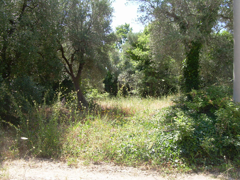 Property for sale in Italy – Land Terra del Bosco, Guardialfiera